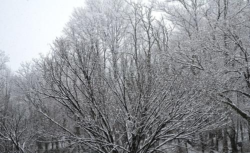 Snowpocalypse 2013 005 - 2013-03-25
