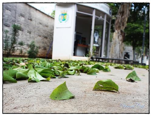 hojas en el piso