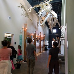 #aquatic #laboratory #museum #learningcenter #PNW #whale #bones #skeletalstructure #homeschool #meetup