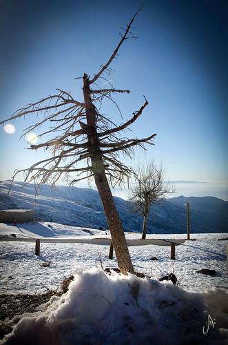 Invierno by ANAISANFOTOGRAFIA