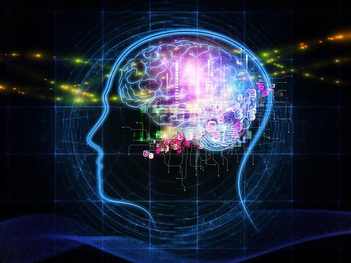 brain human