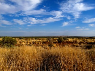 In between Broken Hill and WIlcannia, NSW.