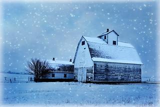 Snowy Corncrib