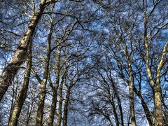 [フリー画像素材] 自然風景, 樹木 ID:201301280600