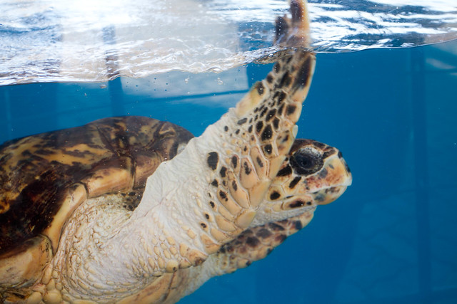 Texas State Aquarium-011.jpg