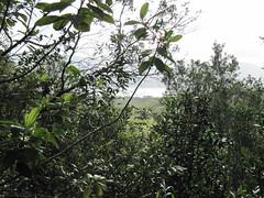Through the trees to Lake Arenal