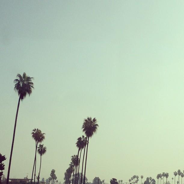 Hazy day/FlyAway.