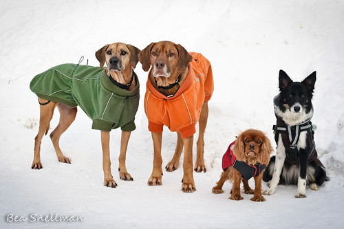 Winter walkie with friends