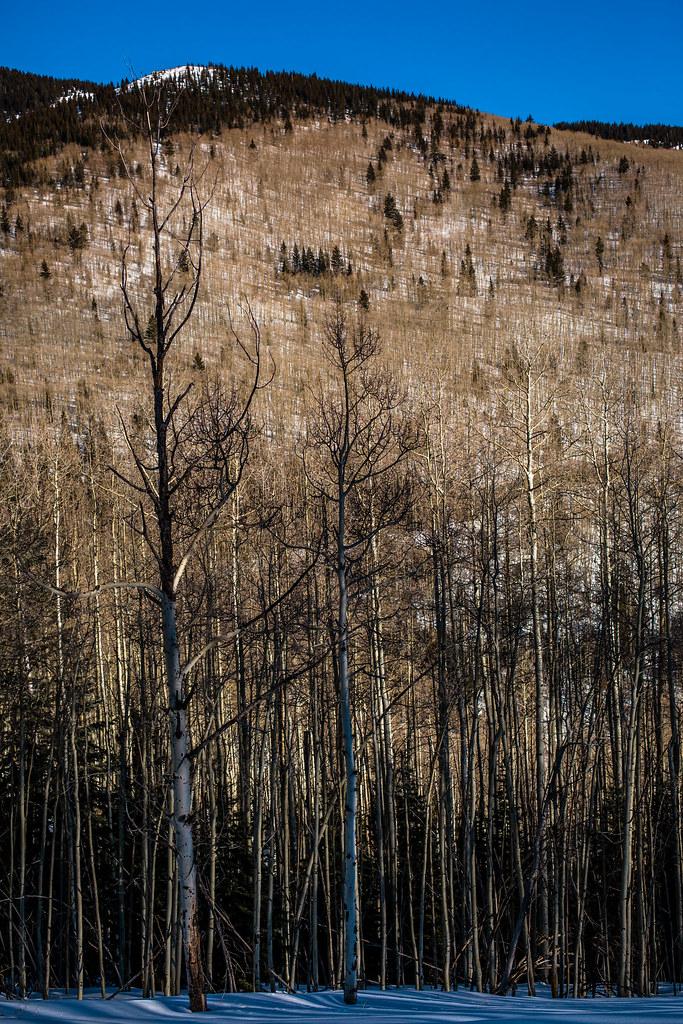 Altitude Of Santa Fe Nm >> Elevation of Black Canyon Campground, Hyde Park Rd, Santa ...