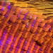 Sunset Moth Scales Macro by Johan J.Ingles-Le Nobel