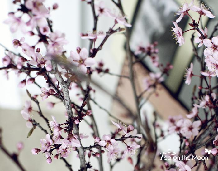 prunus con flor