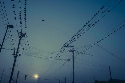 鳥使い 3