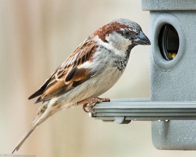 Birds 03.02.13 REV I