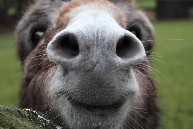 Impressive nostrils