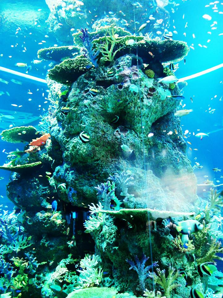 corals S.E.A. Aquarium world's largest aquarium