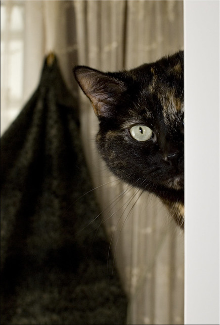 20130315 - Peek-A-Boo