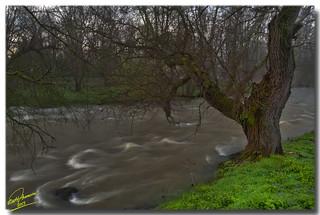 Nature's awakening around Angitis river ... HDR
