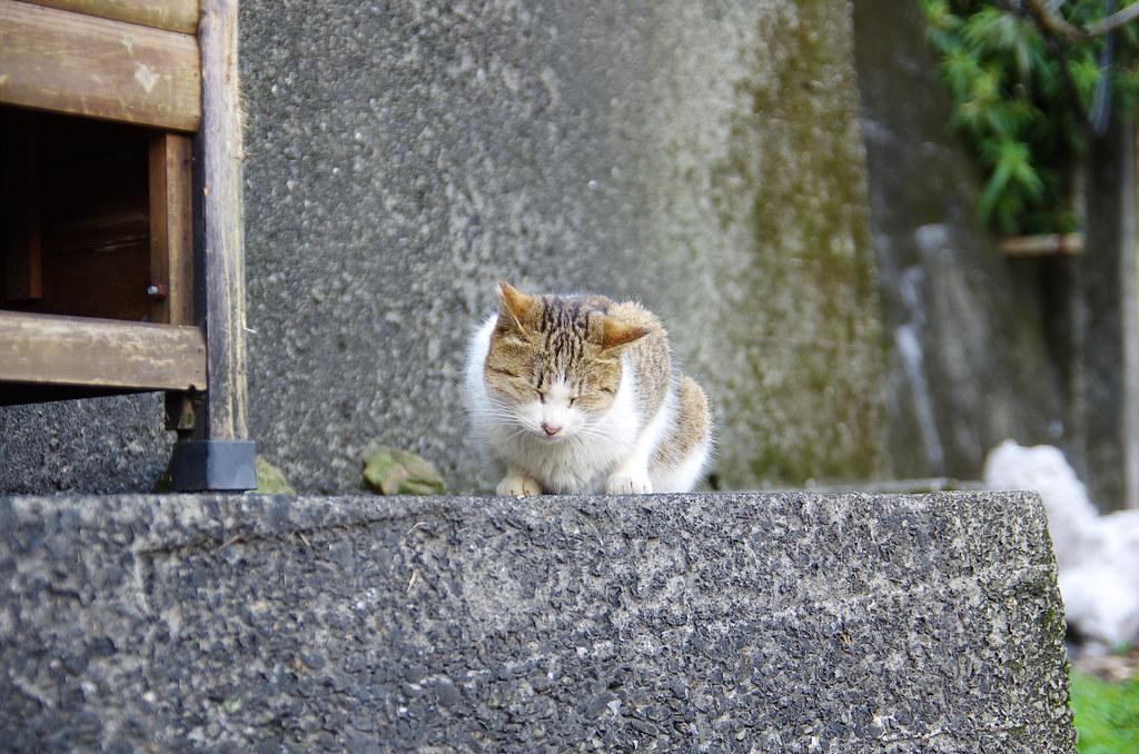 侯硐貓村隨拍