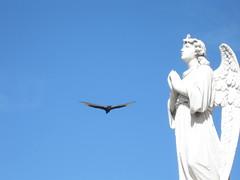 2013-01-cuba-058-cienfuegos-cementerio la reina