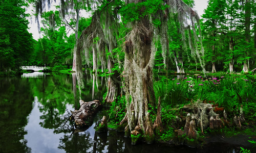 old bridge trees white water moss southcarolina growth swamp plantation spanishmoss magnolia