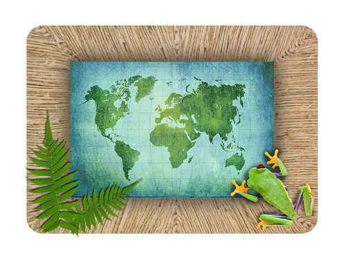 Hemp Picture Frame with Tree Frog