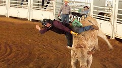 rodeo(0.0), western riding(0.0), equestrian sport(0.0), barrel racing(0.0), animal sports(1.0), cattle-like mammal(1.0), event(1.0), sports(1.0), cattle(1.0), bull riding(1.0), traditional sport(1.0),