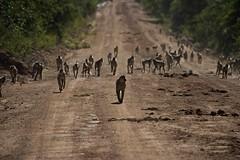 Zambia_  20162016-05-1108-02-28