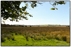 View from the riverside walk at Cors Caron