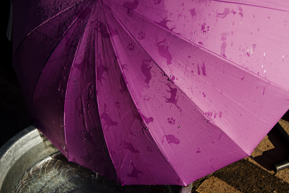 You can see cats, when umbrella is wet