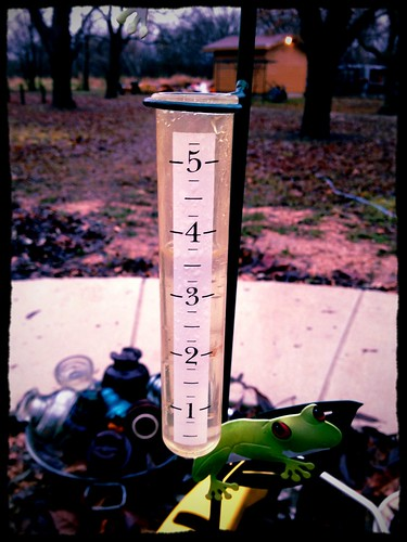 Rain in January!