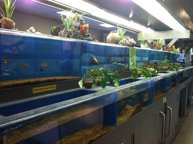 Aquariums fish and reptile pet store chatsworth ca for Exotic fish store