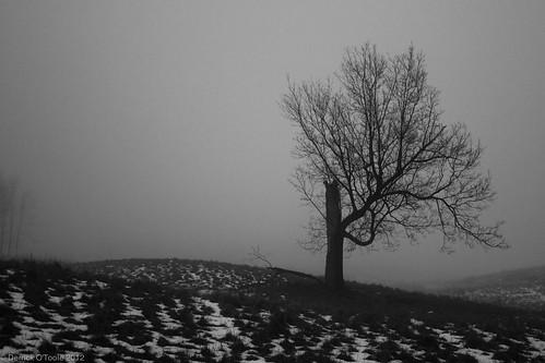 Fog 1 by Wifihighfive