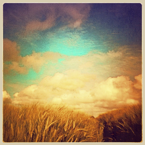 summer england field barley clouds landscape cornfield devon bigsky iphone iphoneart iphoneography alyssthomasphotography snapseed