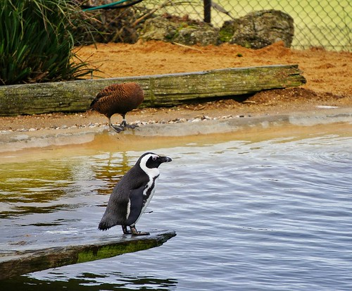 Whipsnade Zoo by beswickl