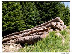2011-06-11_Forêt Domaniale du Mézenc