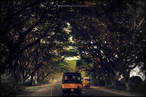Driving through South India on an Auto-rickshaw