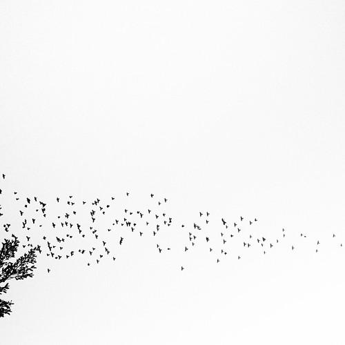 Fly #natura_hnato