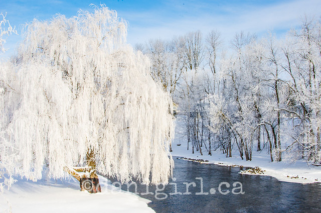 Ice tree-2