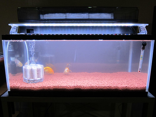 CLEAR LED 600 (RED&BLUE&WHITE)