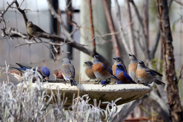 2013 Great Backyard Birdcount