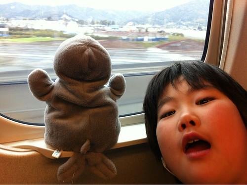 大切にしてるバイカルアザラシさんと京都へ