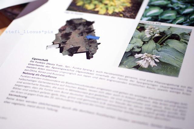 garten_pflanzenblatt