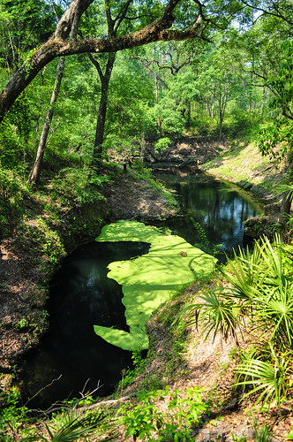 water spring lafayette florida springs freshwater suwannee lafayettebluesprings