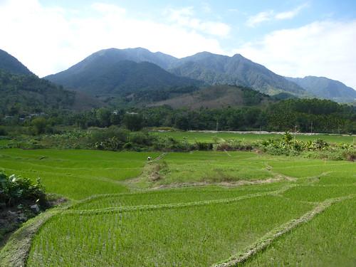 Hainan13-Wuzhishan-Montagne (139)