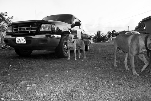 Two Dogs and a Ford