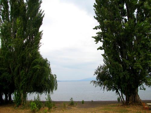 Los árboles y el lago Calafquén by Miradas Compartidas