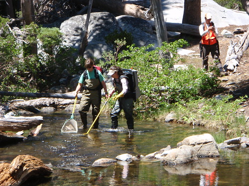 Forest Service crews survey fish species in Lake Tahoe Basin streams. Data shows that invasive species now outnumber native fish. (Maura Santora/U.S. Forest Service)