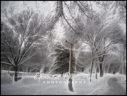 The Day after a Snowstorm by Chantal PhotoPix