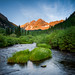 Maroon Creek Wildflowers by Jeff Mollman