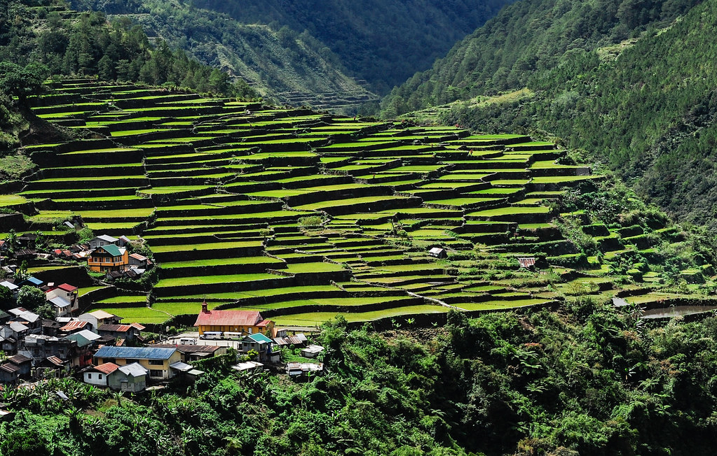 Rice Terraces near Banaue.